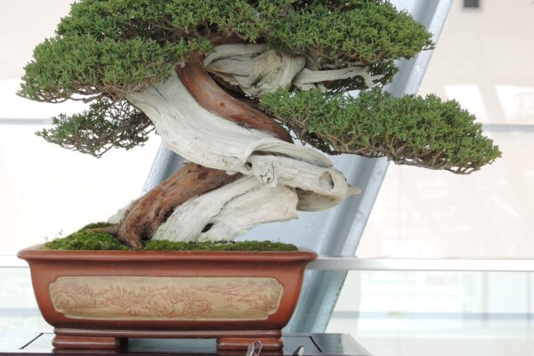 juniperus and gs 1200 lc