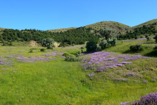 beuatiful fields