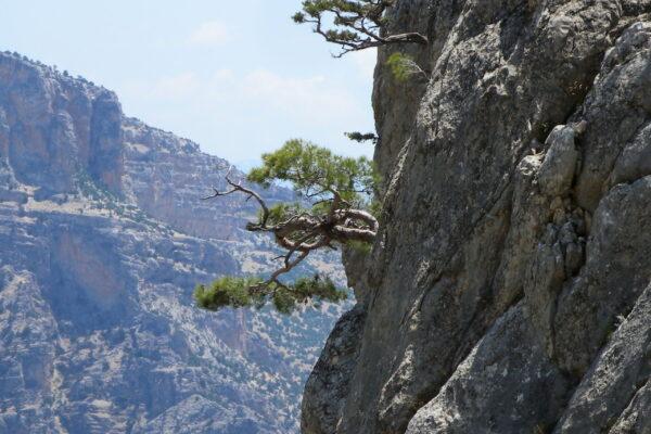 natural bonsai III