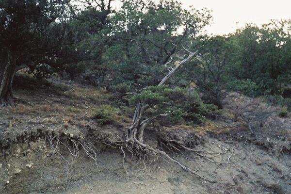 bonsai on the way