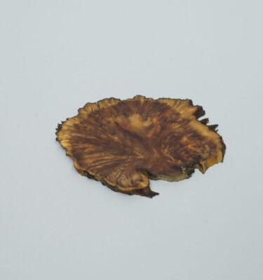 laja para bonsai o planta de acento