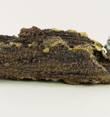 maceta kusamono con forma de tronco de árbol y una ardilla