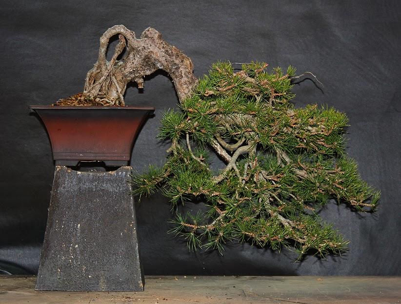 kengai5(2014) jeremias pino silvestris