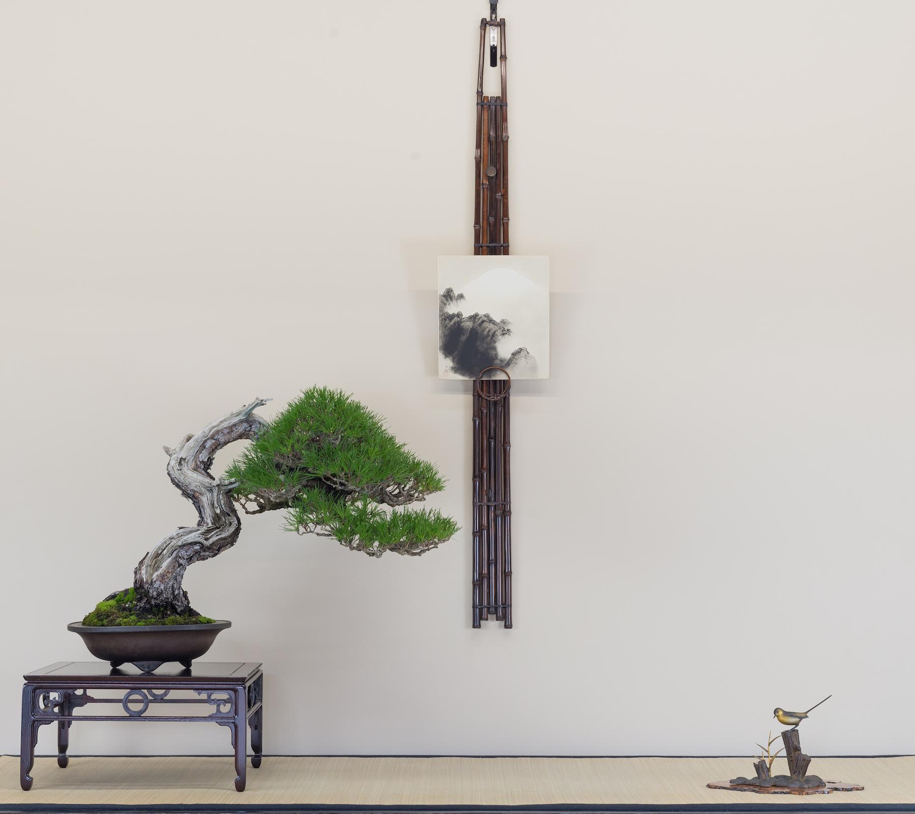 Composición de bonsai de invierno, pino rojo japonés