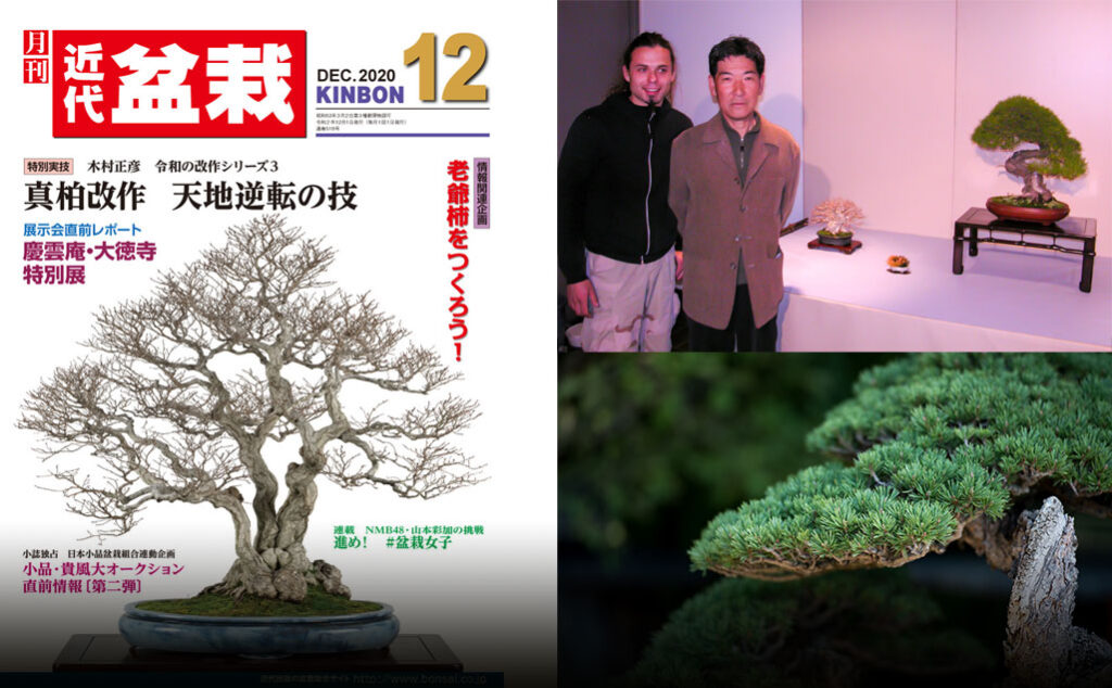 kibon bonsai magazine full interview